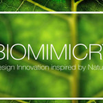 BIOMIMICRY: Design Innovation Inspired by Nature