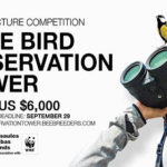 Architecture Competition: Pape Bird Observation Tower
